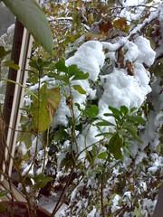 窗外的绿树被大雪压进了窗户
