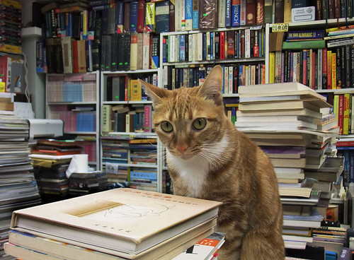 cute bookstore cat pic