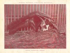 zoorelief p15