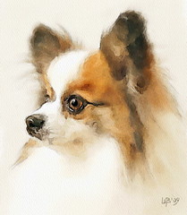Lovely dog (piker77) Tags: dog painterly art face animal digital photoshop watercolor painting interesting media natural retrato aquarelle digitale manipulation simulation peinture illusion virtual watercolour transparent acuarela tablet technique wacom ritratto stylized pintura portre  imitation  aquarela aquarell emulation malerei pittura virtuale virtuel naturalmedia bildnis    piker77wc arthystorybrush
