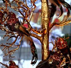 Close Up (delsignorem) Tags: christmas winter window closeup photo shoot dec sparkle 2009 dazzle in florists delsignorem