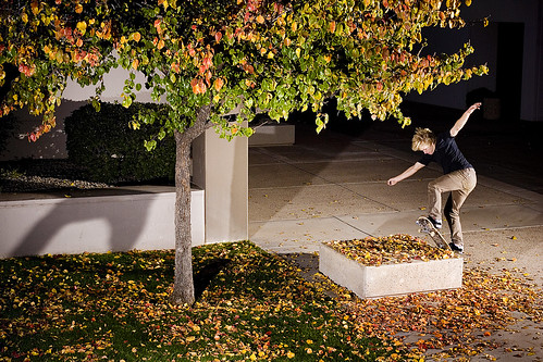 Caleb Front Blunt Through The Leaves