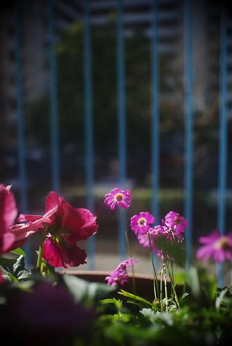 our small garden #4