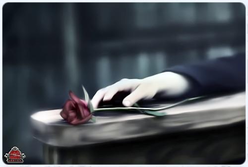 One Rose ...