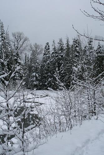 Whistler Woods