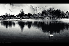 No Colour (KY-Photography) Tags: park uk trees winter light shadow sky blackandwhite bw snow ontario canada reflection bird nature clouds contrast dark landscape scotland swan pond glasgow ky sony guelph cybershot ps gb khalid pointshoot allrightsreserved kal lanarkshire knightswood dscp12 kyphotography yousifie khalidyousifie