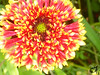 Flower (Tasha Downs) Tags: flower fleur garden nice pretty flor monet 花 epic niceflower monetsgarden