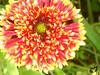 Flower (Tasha Downs) Tags: flower fleur garden nice pretty flor monet 花 epic niceflower monetsgarden