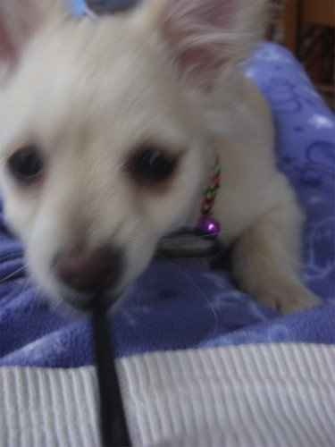 puppy's got the camera strap!