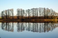 Ežeras (Zitute) Tags: gamta ežeras medžiai gėlės