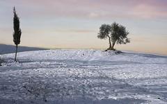 Neve.... (Ferro55) Tags: nikon neve toscana paesaggio 2010 torritadisiena ferroniandrea