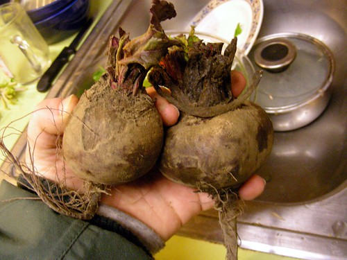Beets grown in the Mat-Su Valley, Alaska
