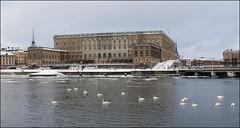 royal castle (helena.e) Tags: winter bird castle water vinter swan stockholm gamlastan svan slott helenae helenab