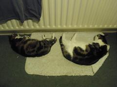 Thatsit and Oimouttahere taking a nap