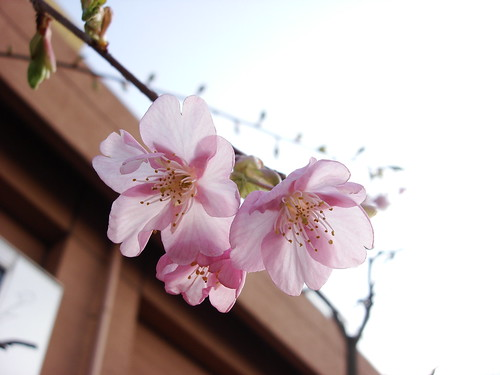 2010-02-18 東京之旅第四天 151