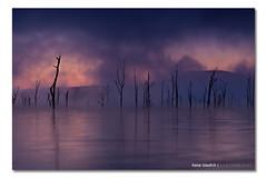 -|-|||--||--\\--||--- ([ Kane ]) Tags: morning winter mist lake water fog photography dawn sticks purple australia brisbane creepy qld queensland kane campcrystallake gledhill sigma1020 50d moogerah lakemoogerah moogerahdam kanegledhill wwwhumanhabitscomau moojirah kanegledhillphotography
