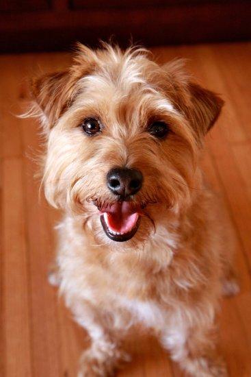 Buster's Haircut