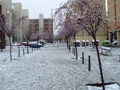 Neu a la Mina (08/03/10) (ddlm) Tags: la nieve mina sant adri neu lamina bess santadribess adri 8032010
