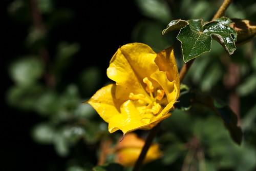 frmontia