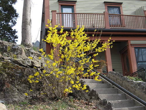 blooming yellow bush