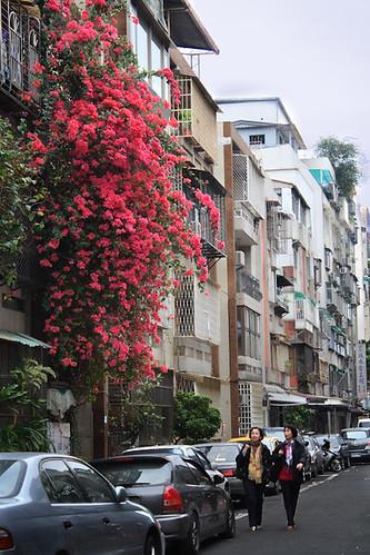 三民路107巷的紅花