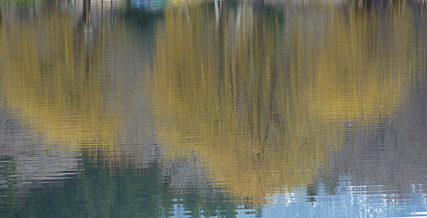 willow reflections