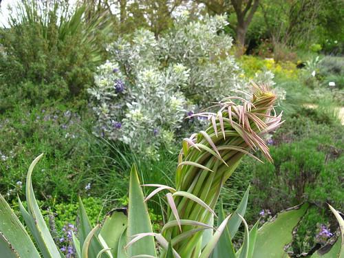 Ruth Risdon Storer Garden; UC Davis