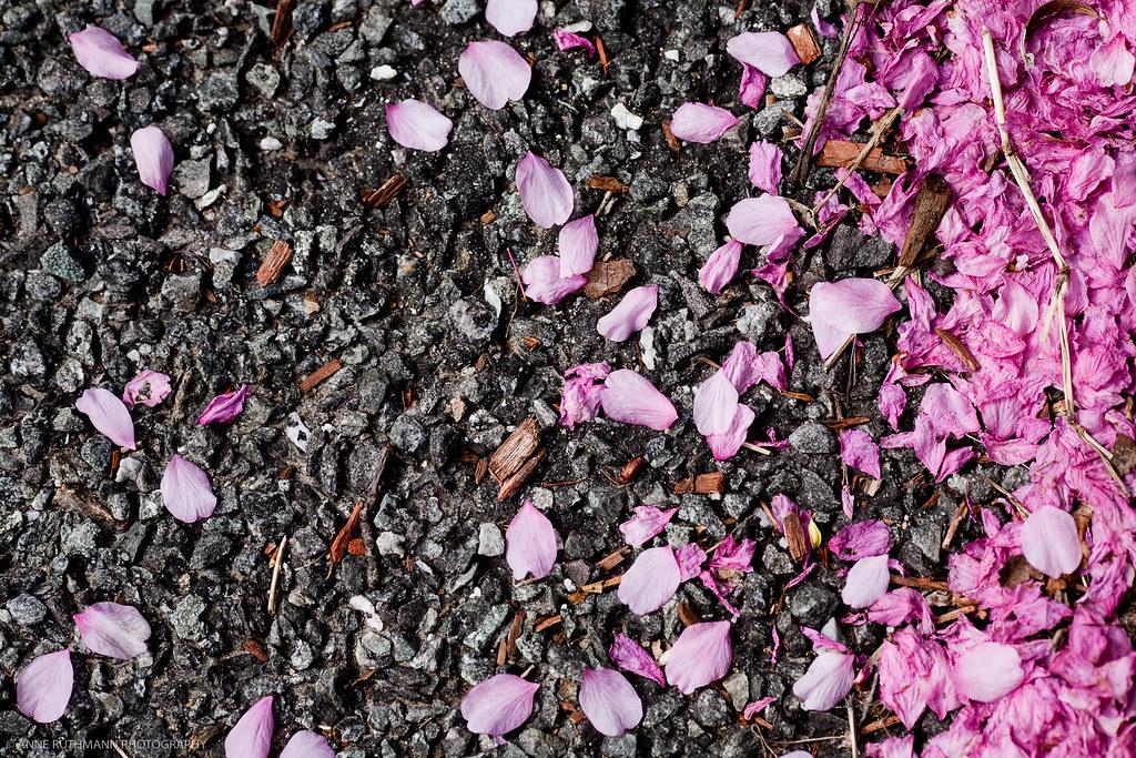 Spring_In_Lowell-1750.jpg