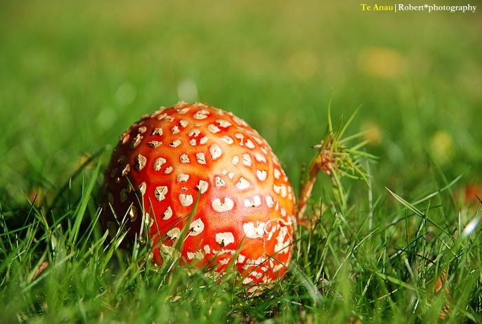 什麼什麼菇