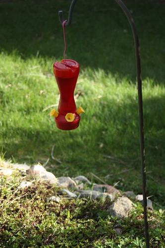 bird feeder1
