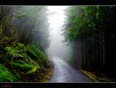 Entering the fog (bent inge) Tags: road wood green forest skog gran vei spruce rogaland hjelmeland ryfylke norwegianwoods hagali norwegianroads