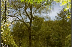 Reflected World (Karlǚ) Tags: toronto reflection tree pond upsidedown edwardgarden