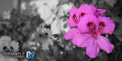 Buganbilia (Photography&Design) Tags: naturaleza color planta hoja hojas flora plantas foto natural guatemala flor vida fotos bonita bella hermosa madre belleza momos tierra hermosura expresión buganbilia momostenango ecosistema madretierra madrenaturaleza expresarvivir florbugambilia