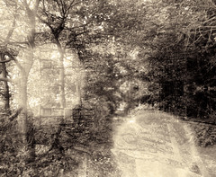 You Thought You'd Forgotten (crescentsi) Tags: trees light abstract history nature yellow forest photomanipulation landscape countryside pattern remember digitalart perspective meme photograph memory histoire opaque distance yesterday past campagne foret insight recollection abre mental psychology forgetting mnemonic abstrait psychological photographydigitalart graphicmaster