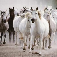 horses-gallop copy