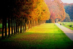 Spotlight (Johan_Leiden) Tags: autumn trees light shadow fall netherlands dutch nederland thenetherlands lane groeneveld baarn cyclinglane anawesomeshot