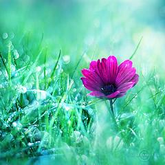 (Joakimkr) Tags: flower canon photography eos 350d 50mm bokeh dots 18 joakim healzo krmer
