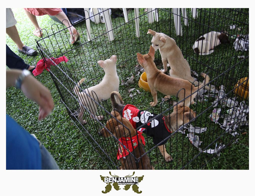dog_adopt3