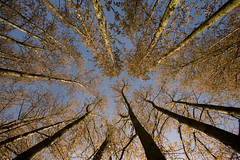 (Fred Thomas) Tags: blue trees light shadow sky brown green nature leaves skyscape landscape photography warm soft photographer branches photograph veins fredthomas youngphotographer leadinlines