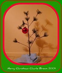 Charlie Brown's Christmas Tree (Free Of The Demon) Tags: christmas usa beautiful america wow jersey anthony greatshot 1001nights picturesque soe edison smrgsbord enjoylife razzie brilliantideas nastalgia flickrsbest bej anawesomeshot almostanything ysplix amazingamateur theunforgettablepictures brilliant~eye~jewel awwwed life~asiseeit beautyunnoticed onewordwow gr8photo llovemypics freeofthedemon atomicaward