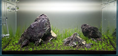 90x45x45cm - Day 7 (Stu Worrall Photography) Tags: red nature cherry aquarium ada tank counter stu drop bubble hc checker planted chrimp dazs braceless worrall tennelus hairgrass stuworrall optiwhite ukaps ukapsorg fiush 90x45x45cm