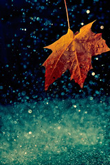 (Slavin@) Tags: autumn light wet water colors rain leaf drop platinumphoto theunforgettablepictures gettyimagesartistpicks