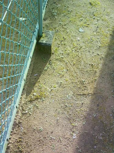 CEREVO CAM testshot :around 10m from myroom