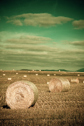 Hay Bales, Beveridge
