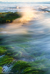 And Crash.... (Sudheendra Kadri) Tags: california longexposure sunset sea santacruz color green beach nature water landscape flow surf crash smooth wave vegetation lowtide splash sudhi naturalbridgesstatebeach sudheendrakadri