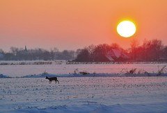 The world today at sunset (powerfocusfotografie) Tags: winter sunset orange white snow cold colors twilight deer tele henk nikond90 powerfocusfotografie
