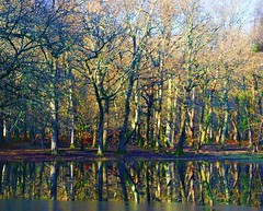 New Forest Reflections  --  Disappearing Pond. (algo) Tags: uk blue trees light red england orange brown sunlight white black green water reflections photography grey interestingness topf50 europe topv1111 topv999 gray hampshire explore algo topf100 frontpage topv666 newforest treetrunks 100f explore9 50f explorefrontpage explore10 100117