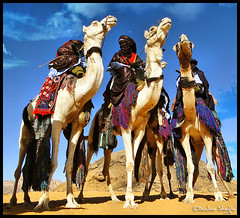 Al-Mahari Show ! (Bashar Shglila) Tags: world sahara photography gallery desert photos top best most worlds popular libya camels lybia tuareg libyan ghat libia libyen saharan líbia libië libiya liviya libija либия توارق ливия լիբիա ลิเบีย lībija либија lìbǐyà libja líbya liibüa livýi λιβύη virgiliocompany ايموهاغ هقار