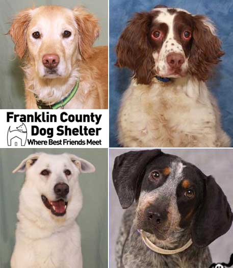 franklin-co-dog-shelter