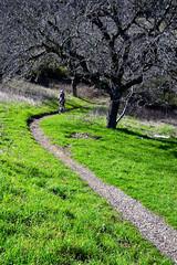 Spring Grass Photo